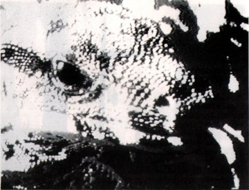 Catalogue image, from Video/Culture catalogue, for Richard Guthrie: Dog and Lizard Legend (1985).